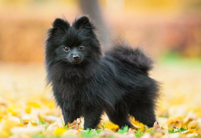 小型犬が先天的に発症しやすい「水頭症」