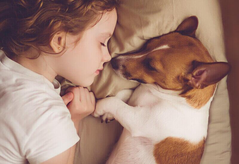 犬の習性?愛犬が飼い主の足元で寝るときの心理とは?犬が寝る位置で分かる愛犬との信頼度