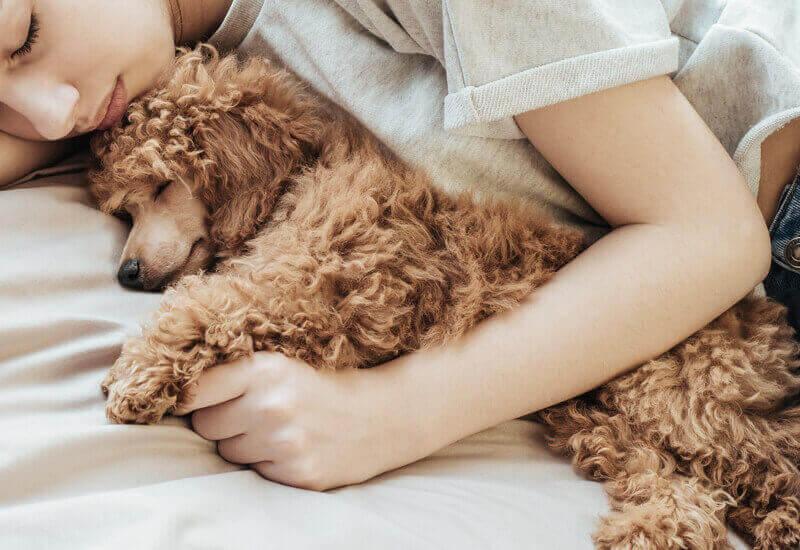 犬が飼い主と一緒に寝る4つの理由