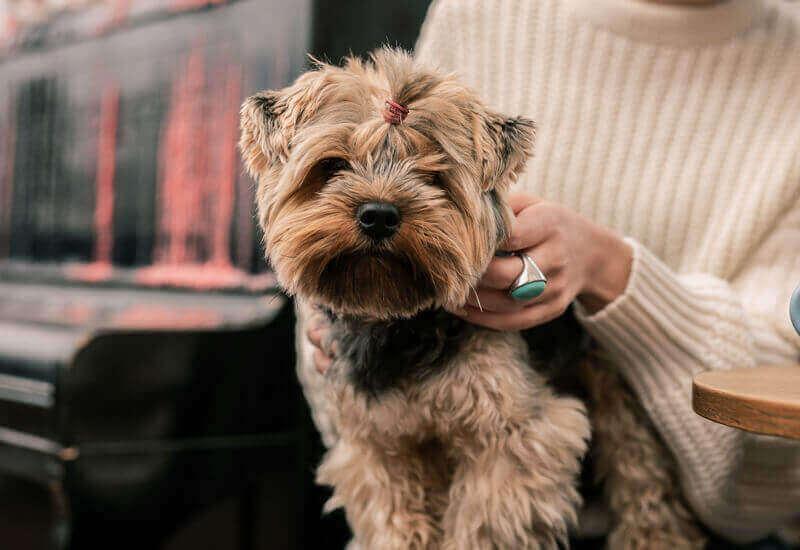 「おすわり・待て・伏せ・来い」愛犬に教えるべき基礎トレーニングとそのメリット