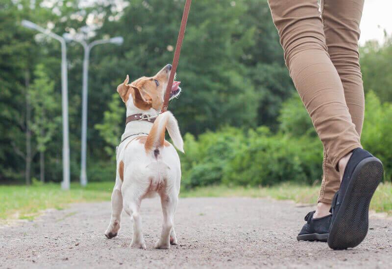 基礎トレーニングは愛犬自身を守るためのトレーニングでもある