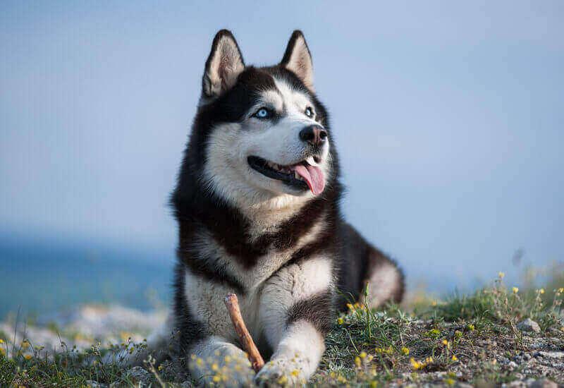 犬の聴覚は人の4倍も⁉聞き取り可能な周波数や特徴について