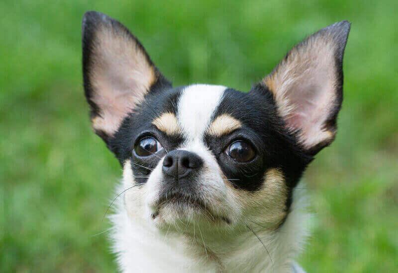 犬は高い音が好きって本当?