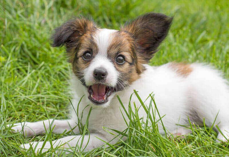 犬にとって言葉は、飼い主さんからの重要なシグナル