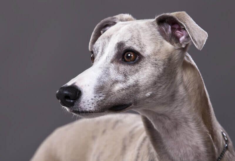 犬の視覚の話~愛犬の目にうつっている世界はどんなもの?