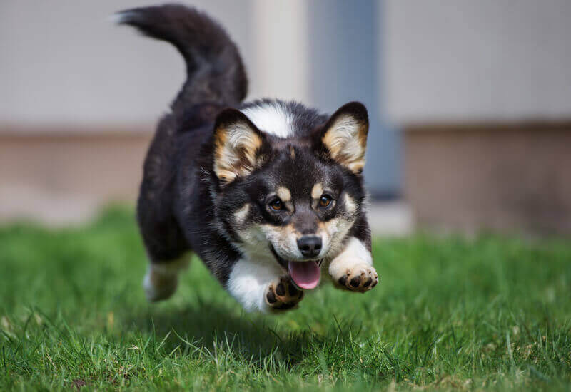 犬の視力は人間の1/6程度しかない