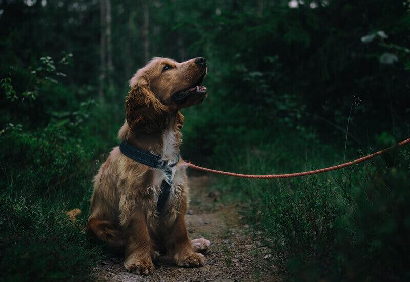 犬が暗闇でも普通に動き回れるのはなぜ?
