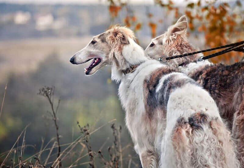 犬にも近視・遠視ってあるの?