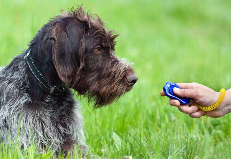 愛犬のしつけ「クリッカーを使ったしつけ方法とそのメリット・デメリット」