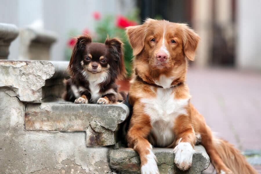 毎日大好きな犬たちに囲まれたい!わんこに関わる仕事の種類と資格について