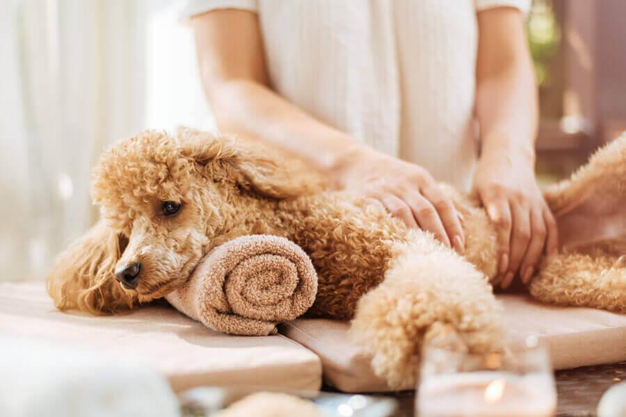 犬との生活に関わる仕事