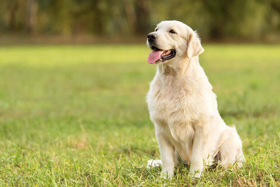 犬は匂いと呼吸を別ものに扱うことができる