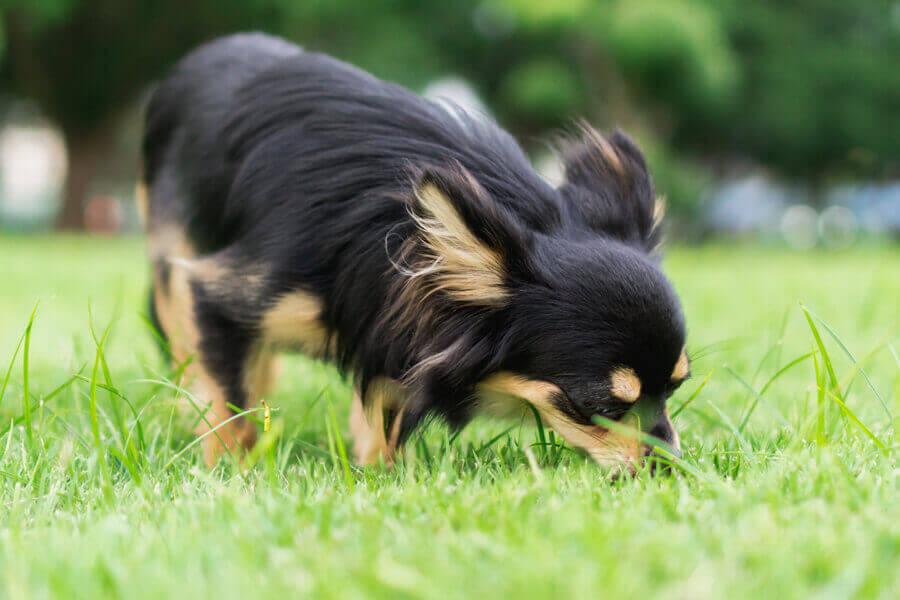 犬にとって匂い嗅ぎは一種のストレス解消法