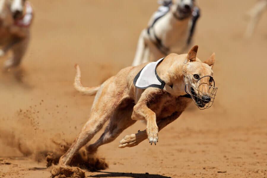 圧倒的な走力は世界最速の動物「チーター」に迫る勢い