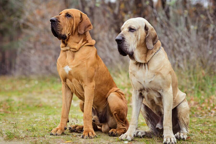 ウェイトプルを始める前に、本当に愛犬に適しているのかを必ず熟考しましょう