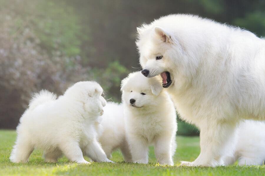 【犬の去勢について】メリット・デメリット、手術の流れや費用を総まとめ!
