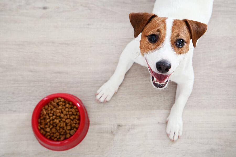 犬の去勢のデメリット「「全身麻酔の影響・太りやすくなる」