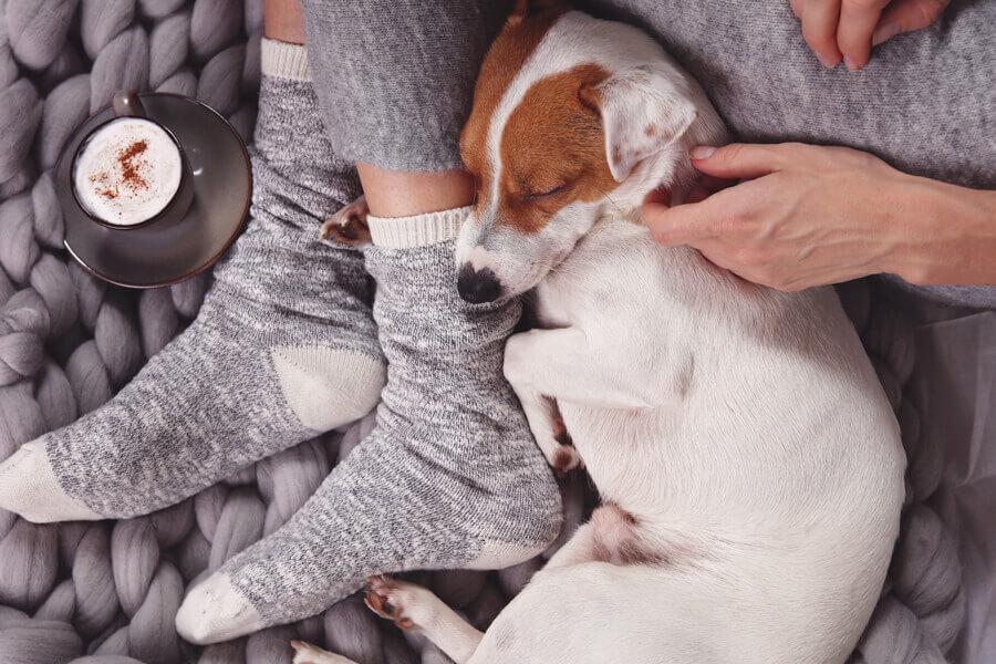 犬が飼い主の足の間で寝る理由は?寝相で分かる犬の心理もご紹介!