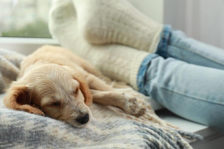 犬が寝る場所から分かる!飼い主の頼れる度