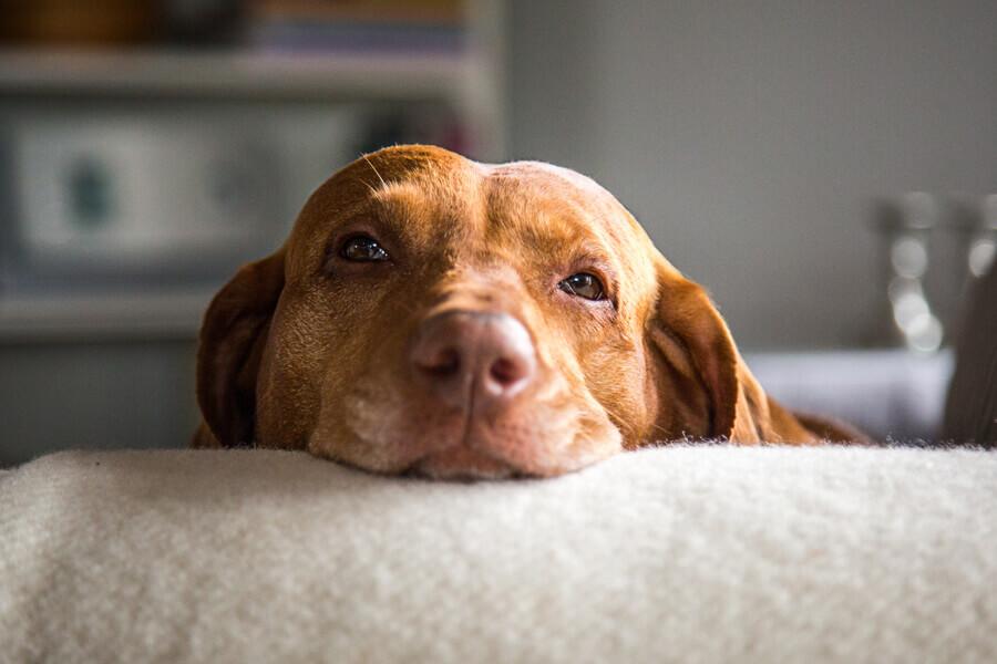 【注意点②】犬にとって有害な食材と一緒に調理しないこと