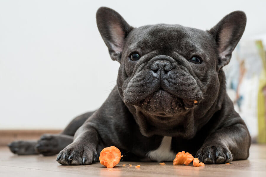 【注意点③】結石になりやすい体質の犬は注意して