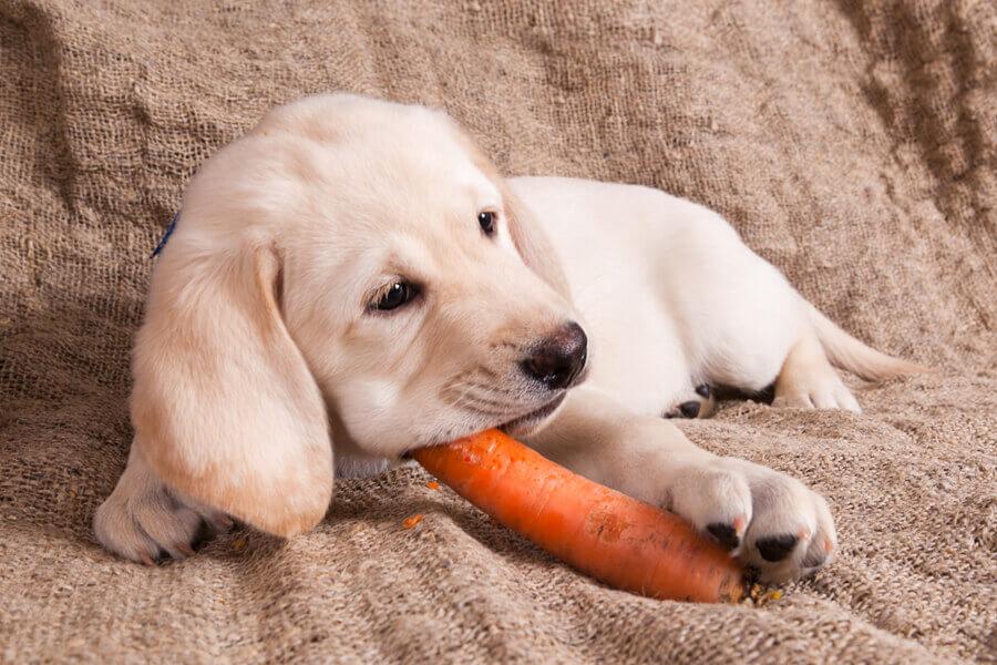 にんじんは犬に与えてもOK!調理時は中毒に気をつけよう