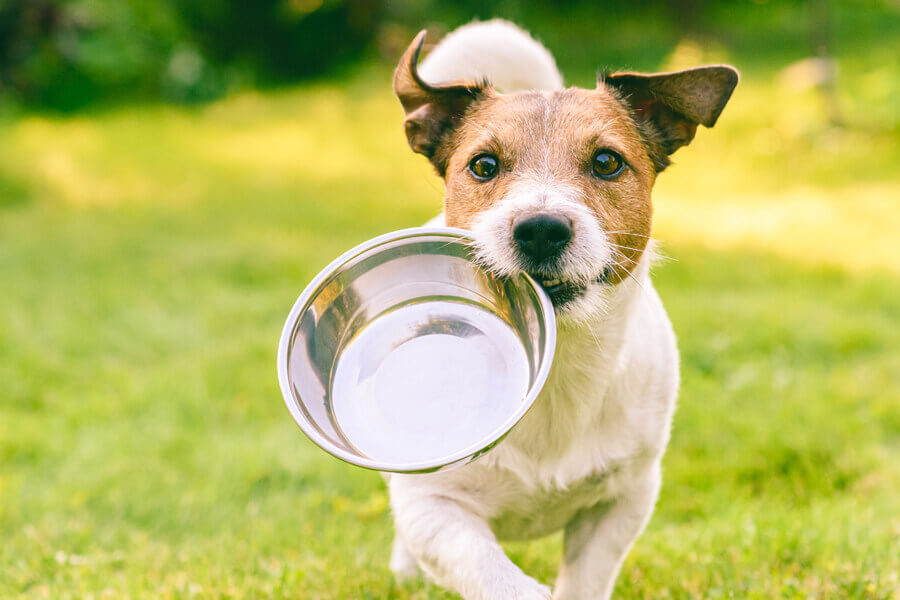 パプリカは犬に与えてもOK!種やヘタ、ワタは取り除いたほうが◎