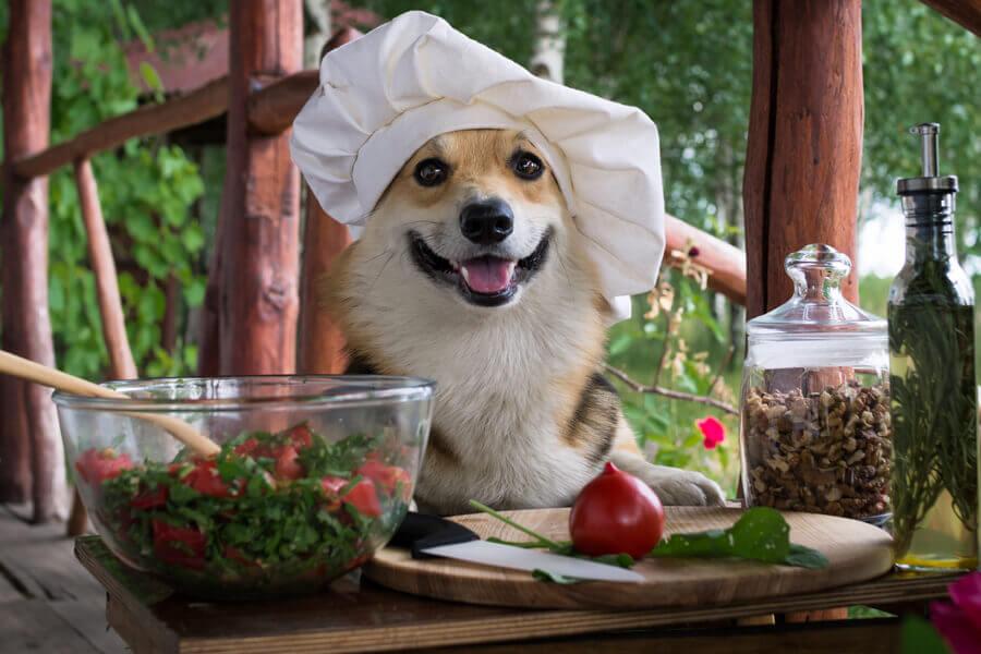 犬はトマトを食べても大丈夫
