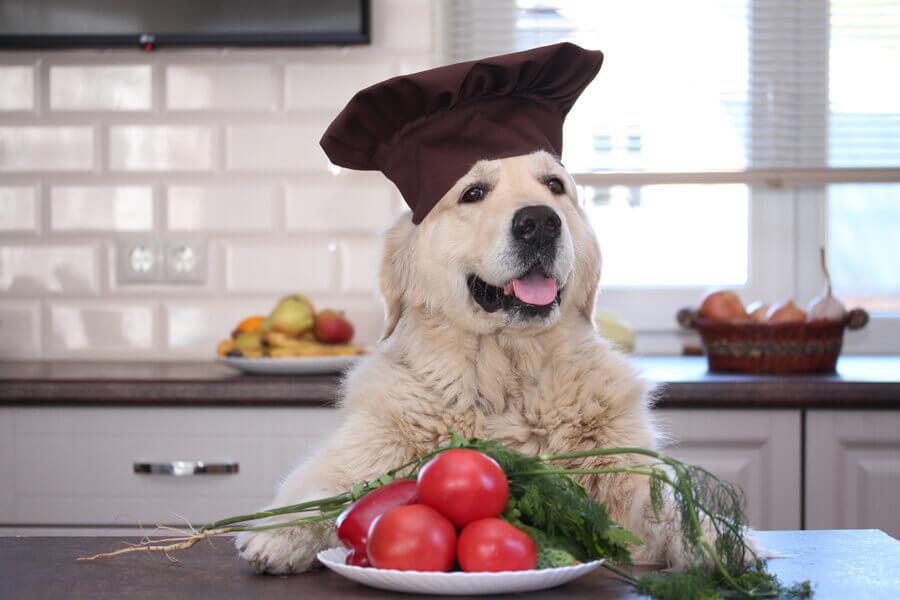 トマトは犬に与えてもOK!ただしトマチン中毒には気をつけよう