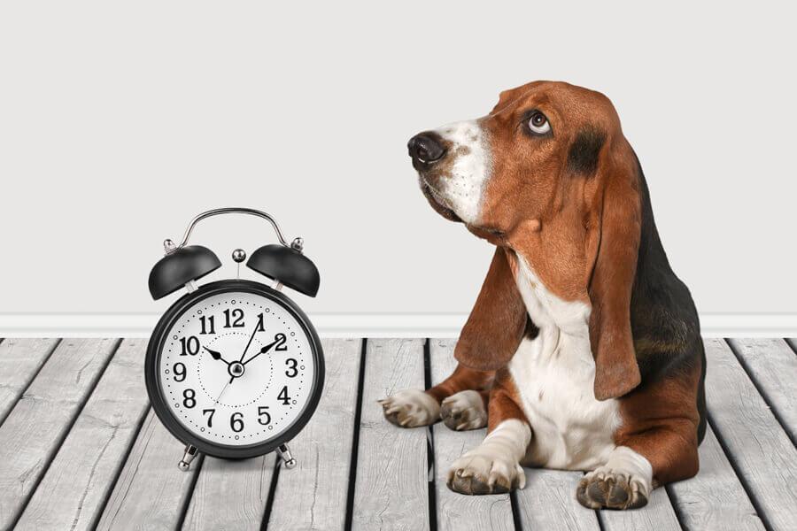 犬の体内時計について考えてみよう~仕組み・乱れる原因・整え方など~
