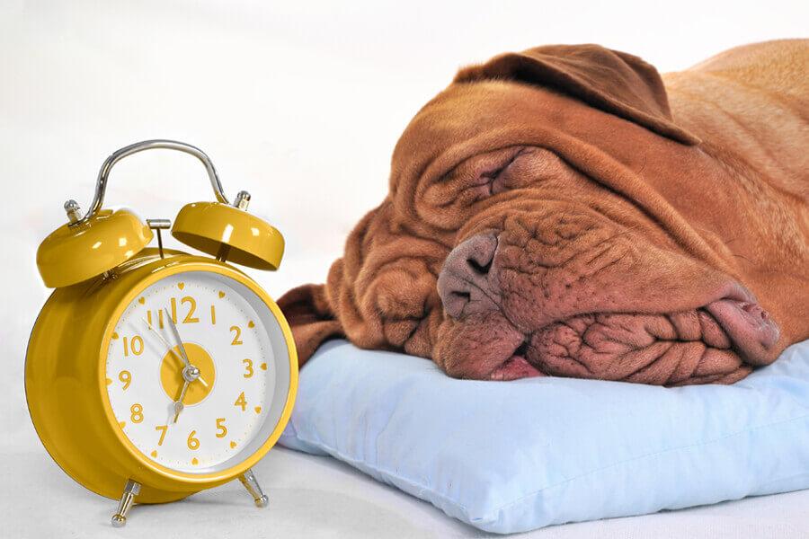 体内時計が狂ってしまうのは、不規則な生活が原因?