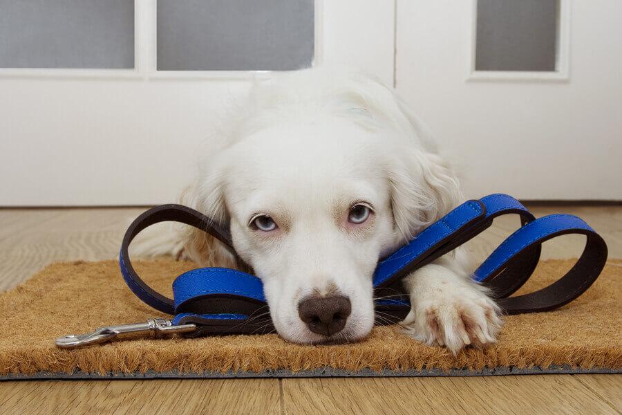 犬の体内時計は「過去の経験」でも養われる