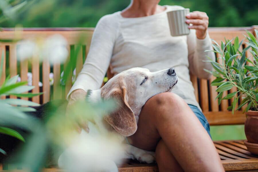 体内時計を整えて愛犬の心身を健康に保とう