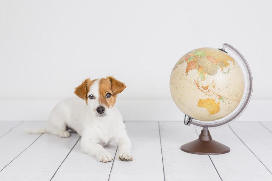 仮説④:地球の磁場を確認し、南北の方角を探している