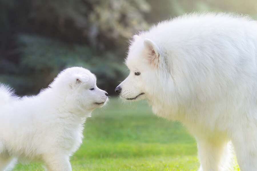 犬と磁力の関係については未解明な部分が多い