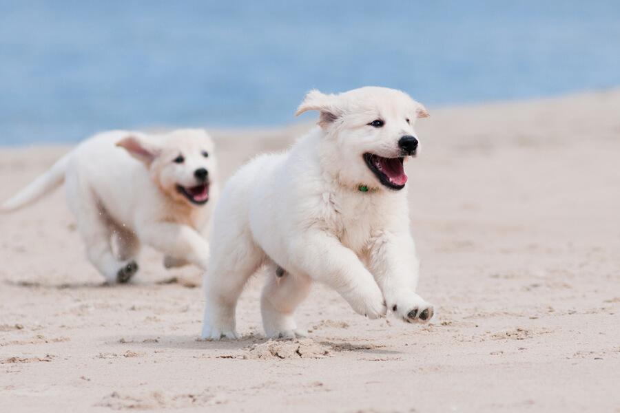 正しい知識を持って愛犬の健康を守ろう