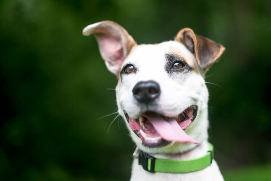 工夫次第で難聴の犬のトレーニングはできる
