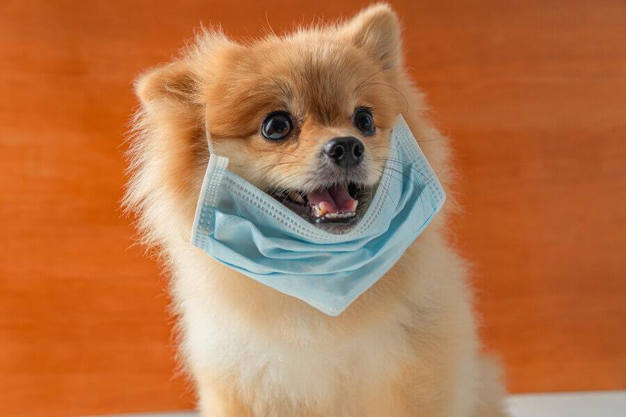 犬に新型コロナウイルスは感染する?新型コロナウイルスについて犬の飼い主さんが知っておくべきこととは