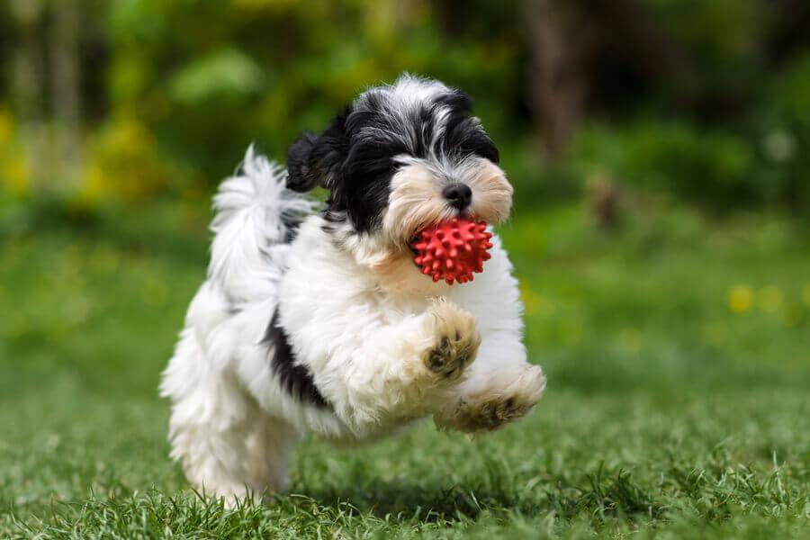 新型コロナウイルスに感染した犬には、どんな症状が出る?