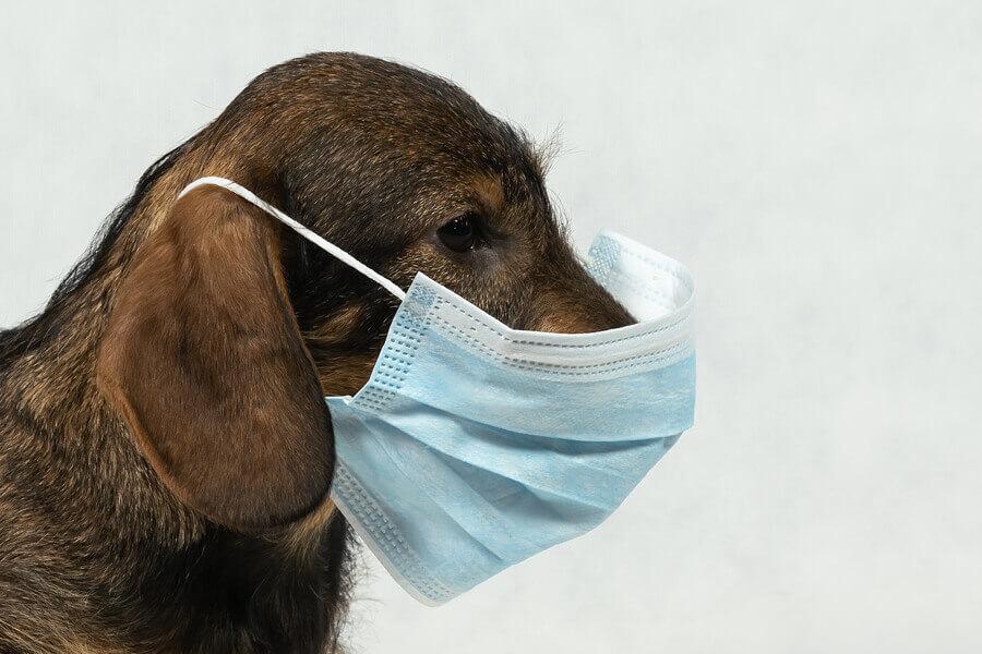 正しい情報をもとに、新型コロナウイルスの感染拡大を防ごう