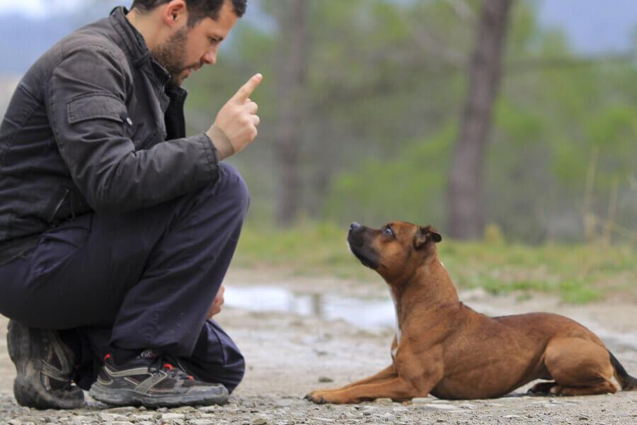 ドッグトレーナーは家庭犬にしつけを行う専門家