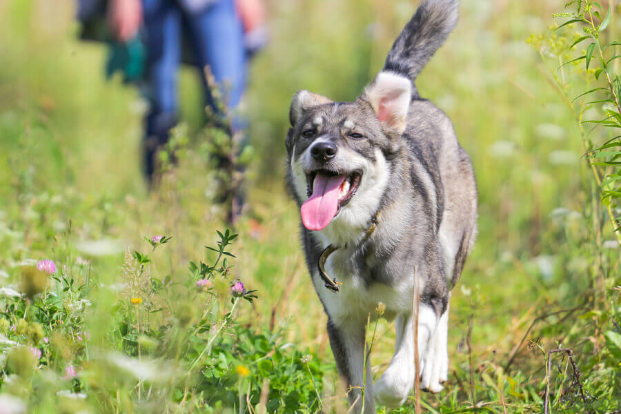 愛犬の性格に合ったドッグトレーナーを見つけることが大切