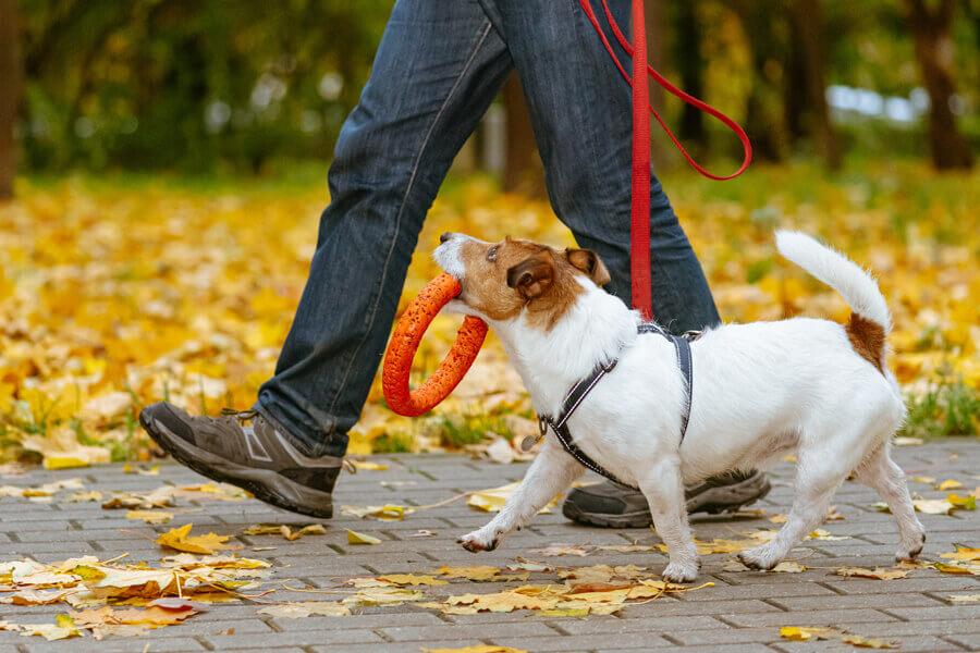 十分なリサーチで愛犬にぴったりのドッグトレーナーを見つけよう