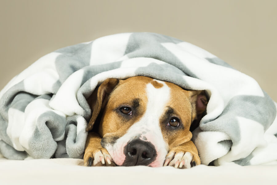 犬も冷房病(クーラー病)になるって知ってた?犬の冷房病の原因・症状・対処法とは