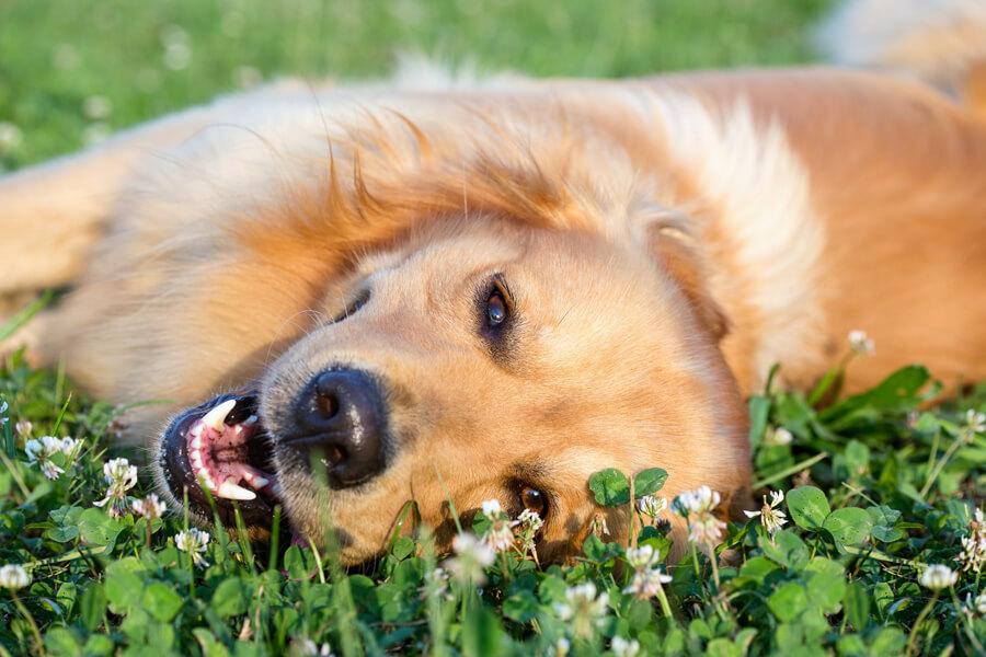 愛犬と暑い夏を上手に乗り越えよう