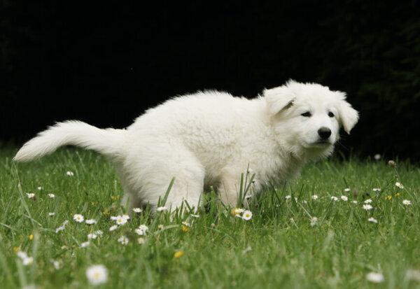 愛犬が下痢に。うんちの回数も多い!その考えられる病気や原因、対処法について