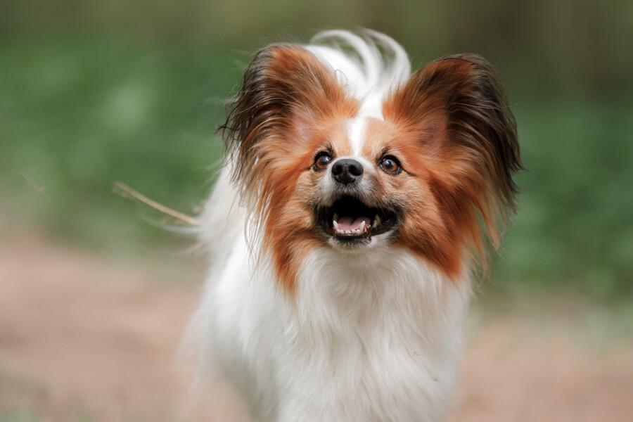 若い犬は誤飲・誤食による下痢に注意!