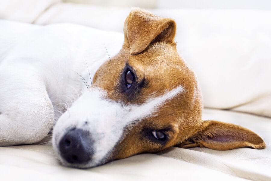 犬が嘔吐した時に考えられる病気は?