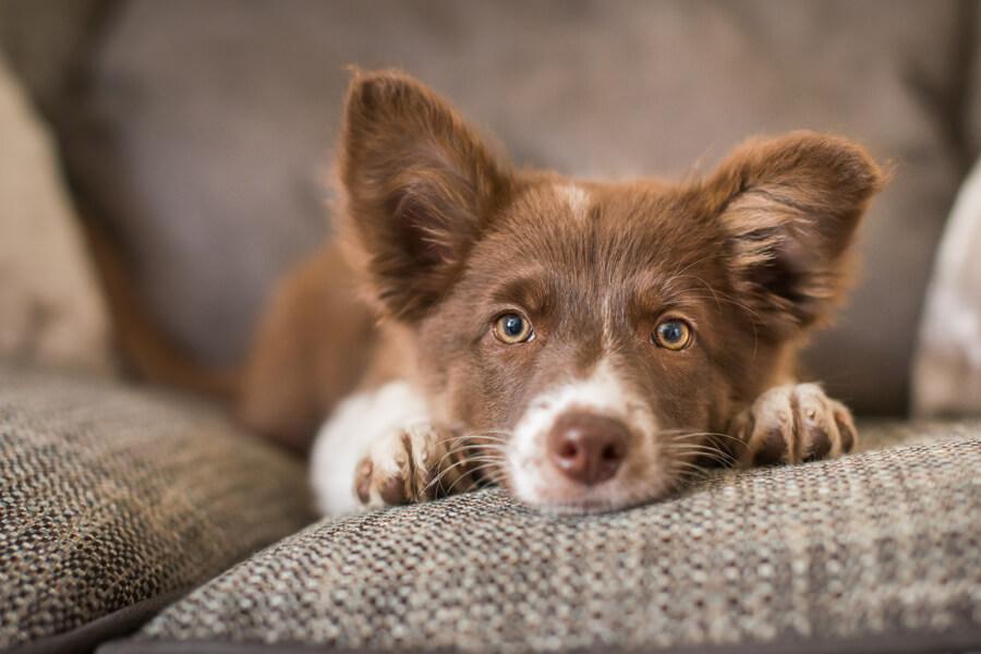 【注意点①】腎臓病・心臓病の犬には与えないほうが無難