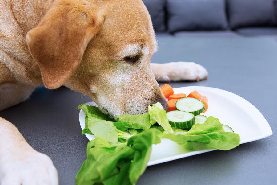 犬はきゅうりを食べても大丈夫